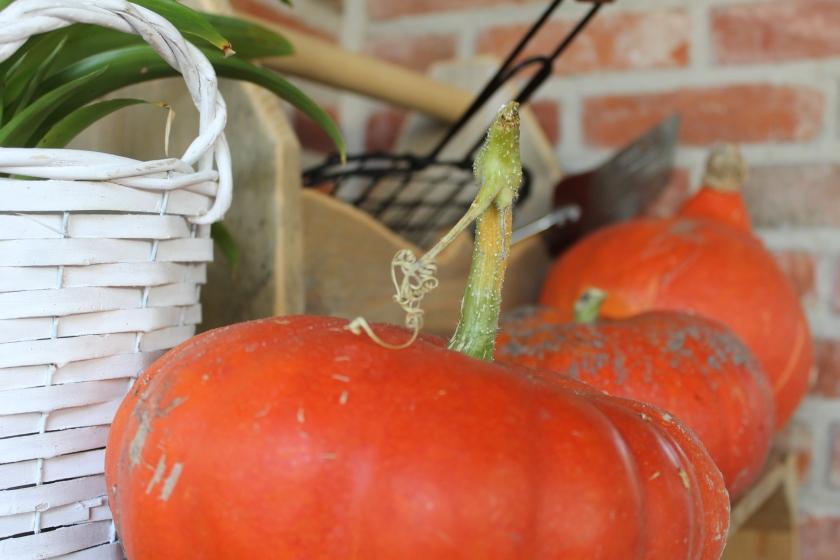 pumpkin-uit-tuin